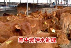 养牛污水处理工艺